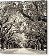 Oak Trees Of Charleston South Carolina In Sepia Acrylic Print