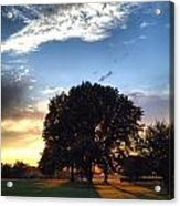 Oak Tree At The Magic Hour Acrylic Print