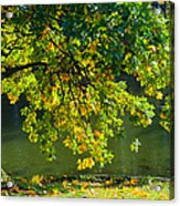 Oak Tree By The Pond - Featured 3 Acrylic Print