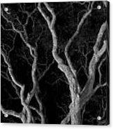 Oak Tree Canopy Under A Night Sky Acrylic Print