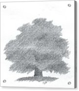 Oak Tree Drawing Number Five Acrylic Print by Alan Daysh
