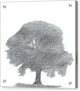 Oak Tree Drawing Number Four Acrylic Print by Alan Daysh