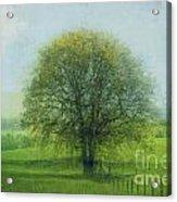 Oak Tree In Spring Acrylic Print