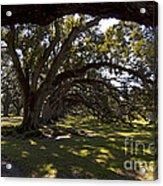 Oak Trees   #5794 Acrylic Print