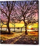 Oak Trees At Sunrise Acrylic Print