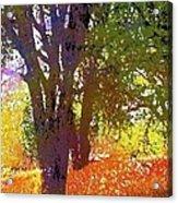 Oaks 27 Acrylic Print