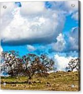 Oaks And Clouds Acrylic Print