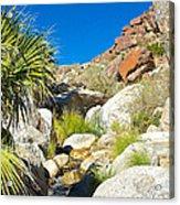 Oasis On Borrego Palm Canyon Trail In Anza-borrego Desert Sp-ca Acrylic Print