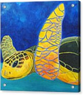 Obx Turtle Acrylic Print
