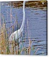 Ocean Bird Acrylic Print