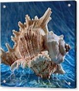 Ocean Breeze Acrylic Print by Tom Druin