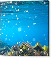 Ocean Garden Acrylic Print by Stelios Kleanthous
