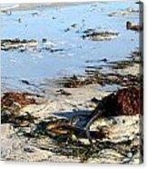 Ocean Life On The Beach Acrylic Print