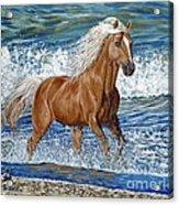 Ocean Stallion Acrylic Print