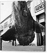 Ocean Sunfish Mola Mola  Monterey 1946 Acrylic Print
