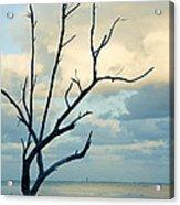 Ocean Tree Acrylic Print