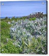 Ocean Vegetation Acrylic Print