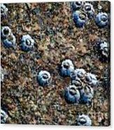 Ocean's Quilt Acrylic Print