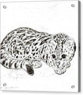 Ocelot Kitten Acrylic Print