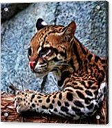 Ocelot Painted Acrylic Print