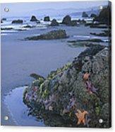Ochre Sea Stars At Low Tide Miwok Beach Acrylic Print
