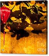 Ochre Wall Silk Lantern 02 Acrylic Print