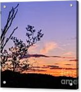 Ocotillo Sunset Acrylic Print
