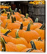 October At The Farm - Pumpkins Acrylic Print