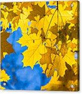 October Blues 8 - Square Acrylic Print