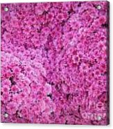 October Carpeting Acrylic Print