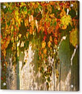 October Colors Acrylic Print