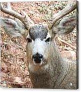 October Deer Acrylic Print
