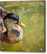 October Duck Acrylic Print