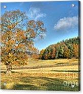 October Gold Acrylic Print
