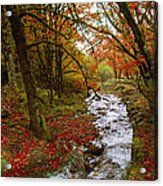 October In Oregon Acrylic Print