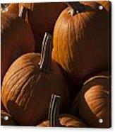 October Pumpkins Acrylic Print