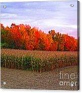 October Sunset On The Autumn Woods Acrylic Print