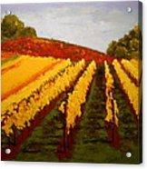 October Vineyard Acrylic Print