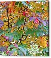 October Watercolors_4 Acrylic Print by Halyna  Yarova