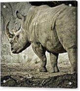 Odd-toed Rhino Acrylic Print