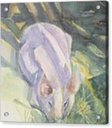 Ode To A Pig Acrylic Print by Grace Keown