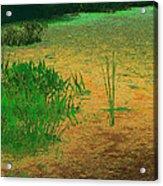 Ode To Monet Acrylic Print