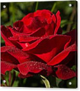 Of Red Roses And Diamonds  Acrylic Print