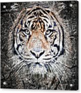 Of Tigers And Stone Acrylic Print