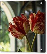Of Tulips And Windows Acrylic Print