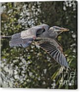 Off To The Nest 2012 Acrylic Print