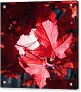 Oh Canada Acrylic Print