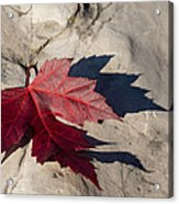 Oh Canada Maple Leaf Acrylic Print