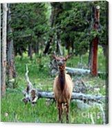 Oh Dear I See A Deer Acrylic Print