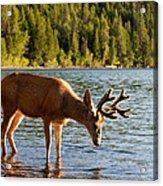 Oh Deer Is That Me Acrylic Print